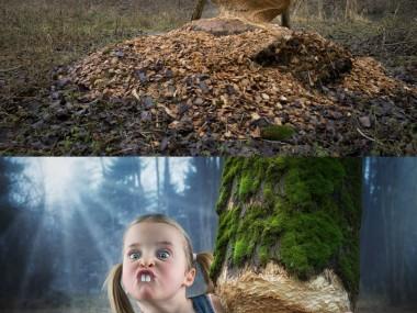 John Wilhelm is a photoholic – Just a little beaver / retouches photos