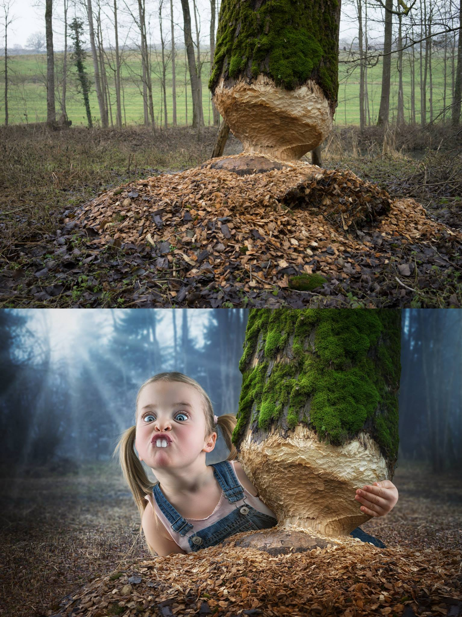 John Wilhelm is a photoholic – Just a little beaver / retouches photos