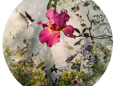 Ysabel Lemay – Arcadia – Visual Artist