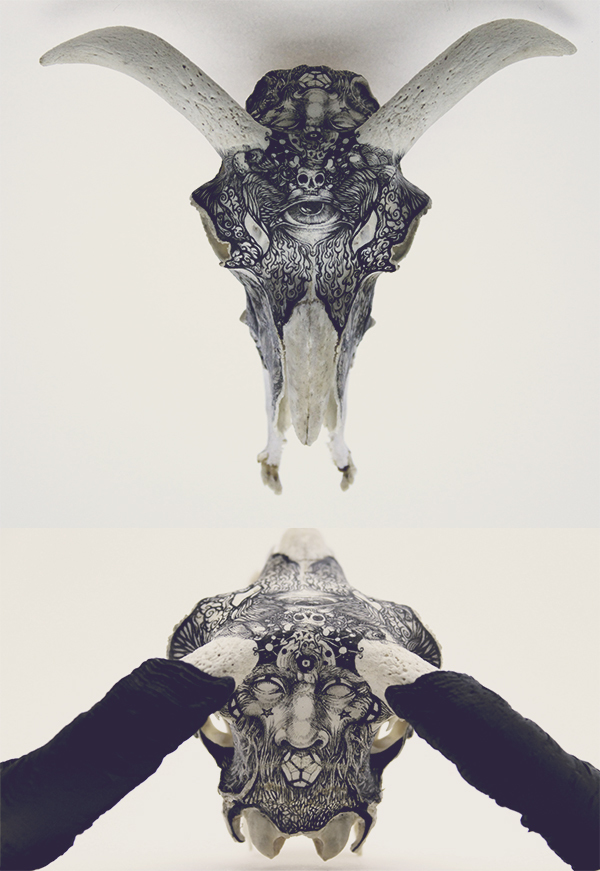 DZO – artist illustration – fine art skull