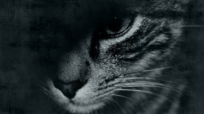 Free Wallpaper / Chat / Cat / Timousse / 2560 x 1440 px – 27″