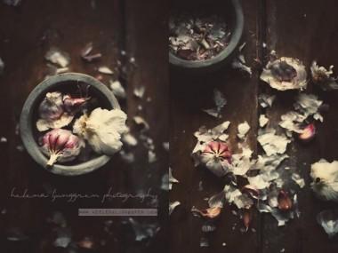 helena ljunggren – ails / Creativ food photography