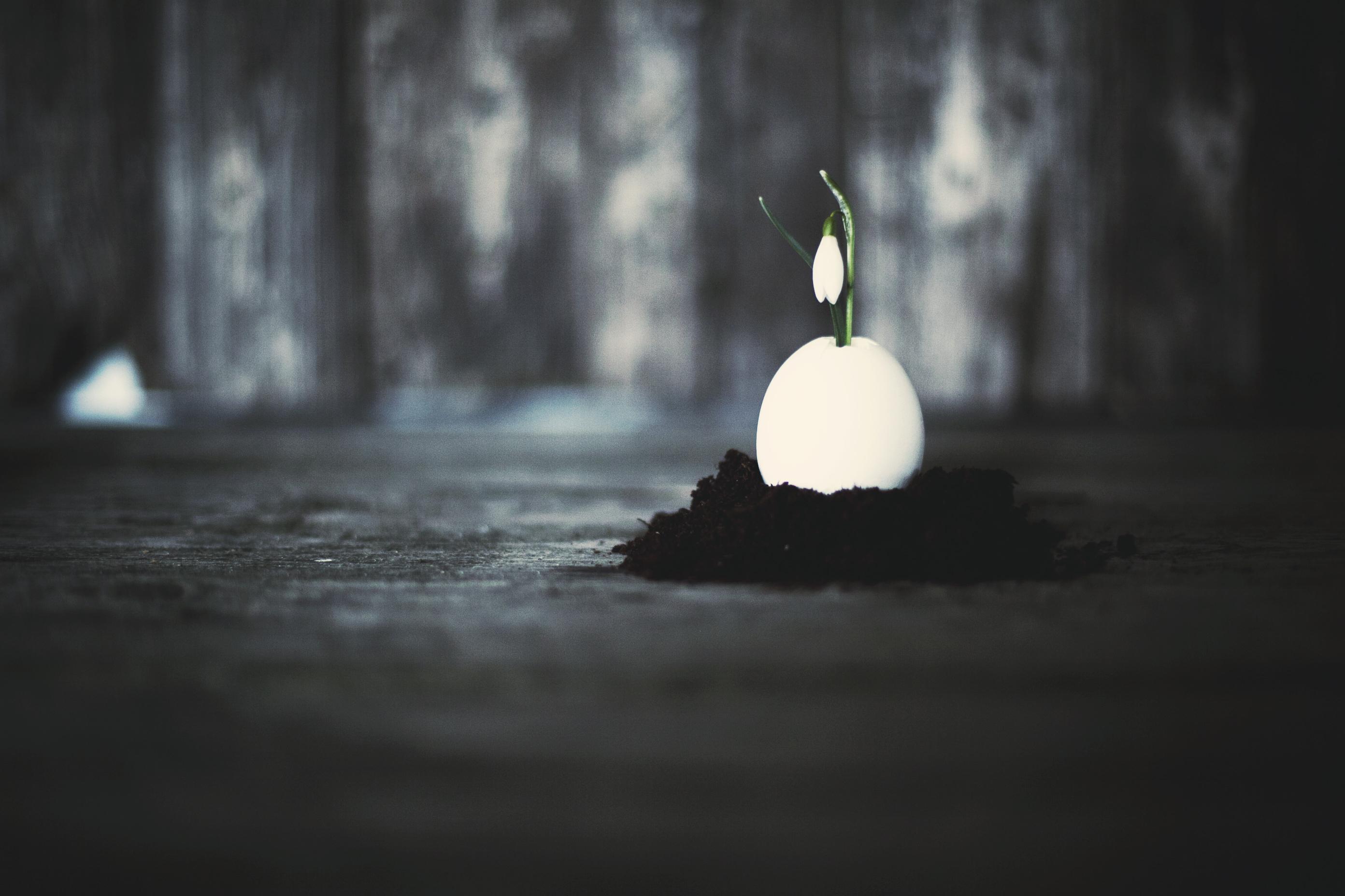 helena ljunggren – ambiance photography flower