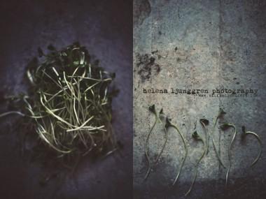 helena ljunggren – cresson / Creativ food photography
