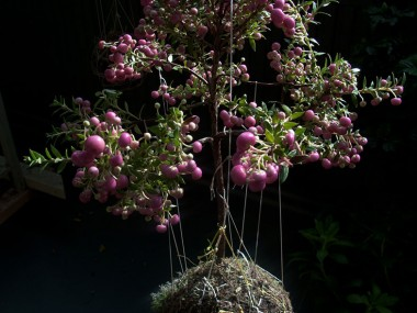 Fedor van der Valk – aerial garden deco