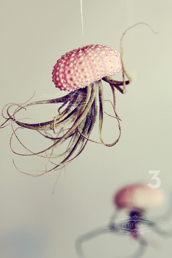 Jelly fish air plant - Petitbeast - etsy shop