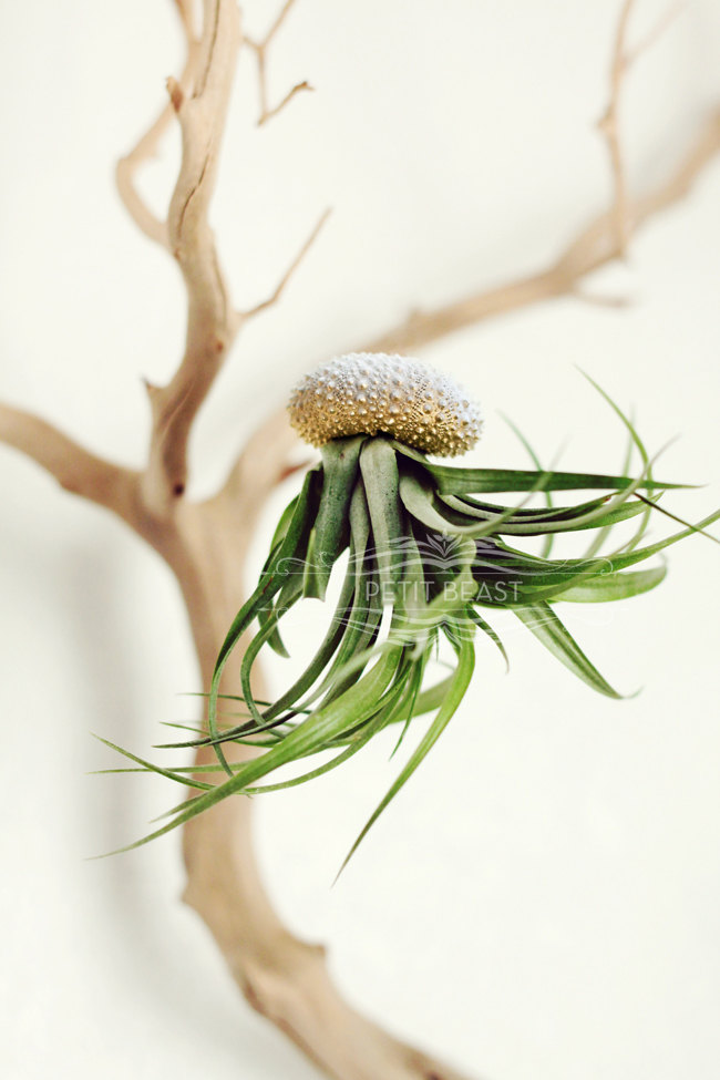 Jelly fish air plant – Petitbeast – etsy shop