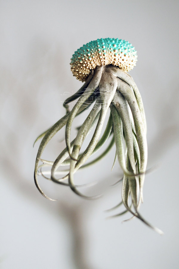 Jelly fish air plant – Petitbeast shop