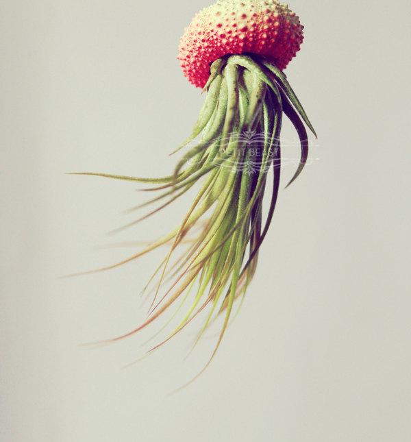 meduse art- Petitbeast