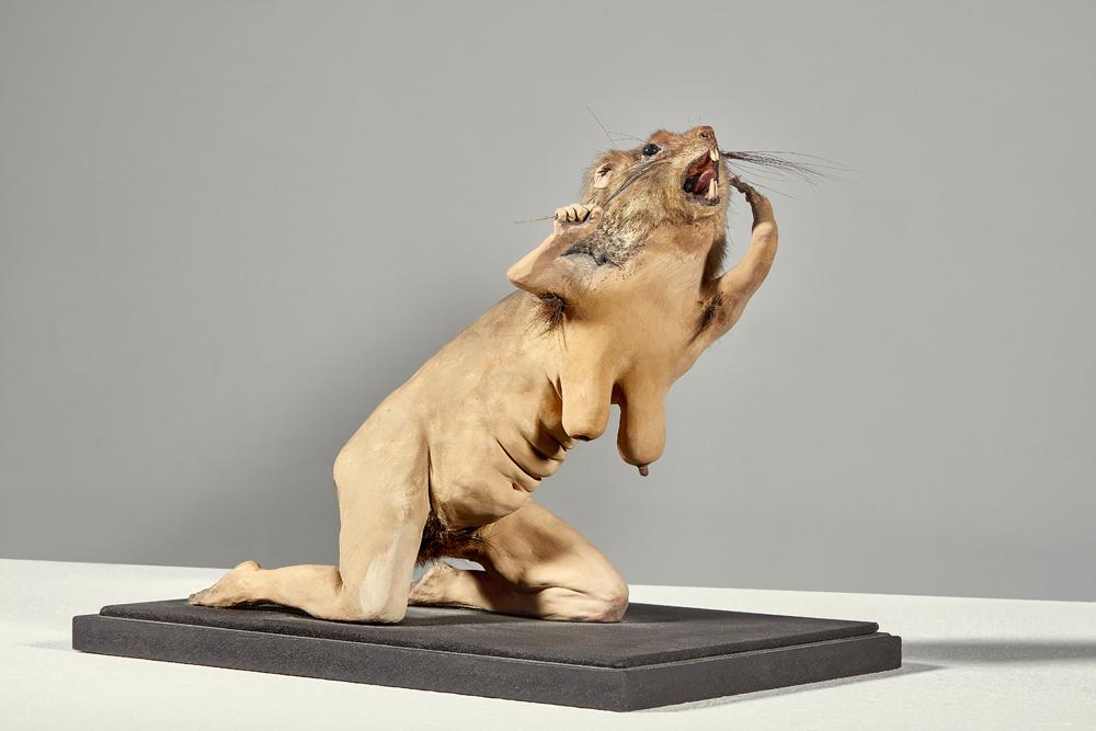 Muriel Belin, Folla ratt femella, 2007, TM, 18x14.5x20 cm