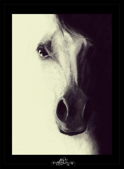 Digital horse illustration ©lilavert