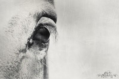 Art prints – Horse eye photo macro ©LilaVert