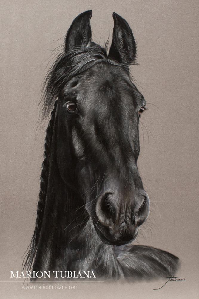 Marion Tubiana – Horse Pastels frison