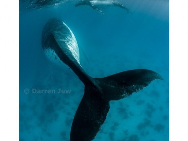 Beautiful under sea photography – Darren Jew – Australia