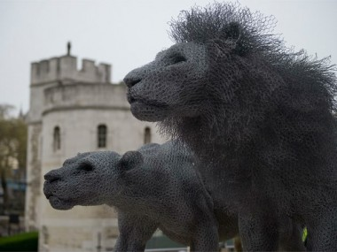 Kendra Haste – lion – sculpture fil de fer – grillages / Galvanised wire