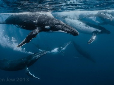 Beautiful whales photography – Darren Jew – Australia