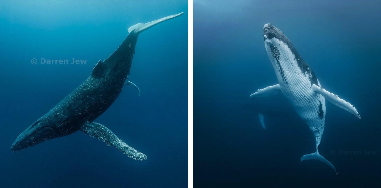 Beautiful under sea photography – Darren Jew – Australia