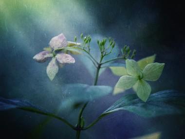 Takashi Suzuki – Pale light textured photo