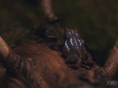 Bioluminescent forest – Toad
