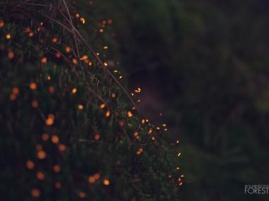 Bioluminescent forest – moss_dots