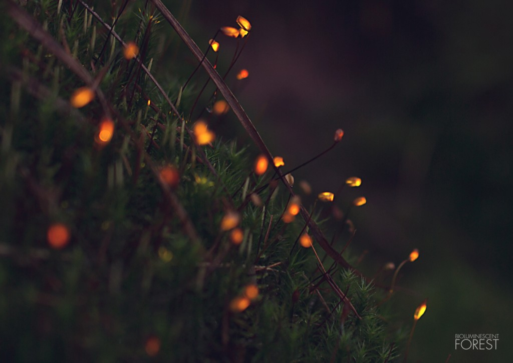 Bioluminescent forest - moss_dots_closeup