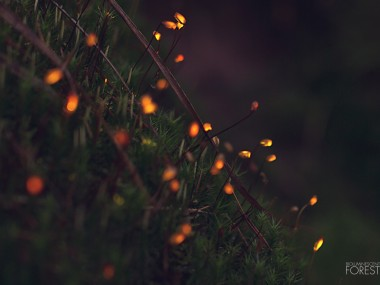 Bioluminescent forest – moss_dots_closeup