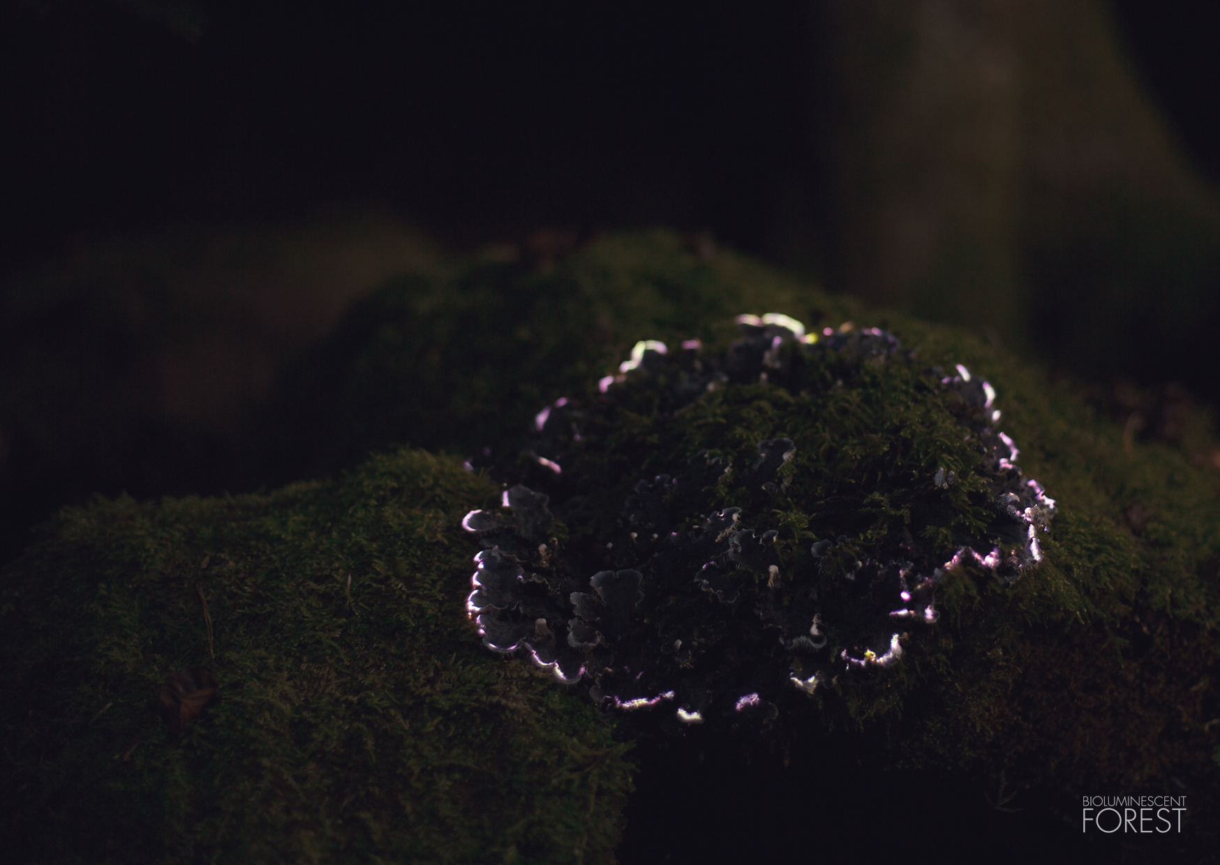 Bioluminescent forest – mushroom_round_02