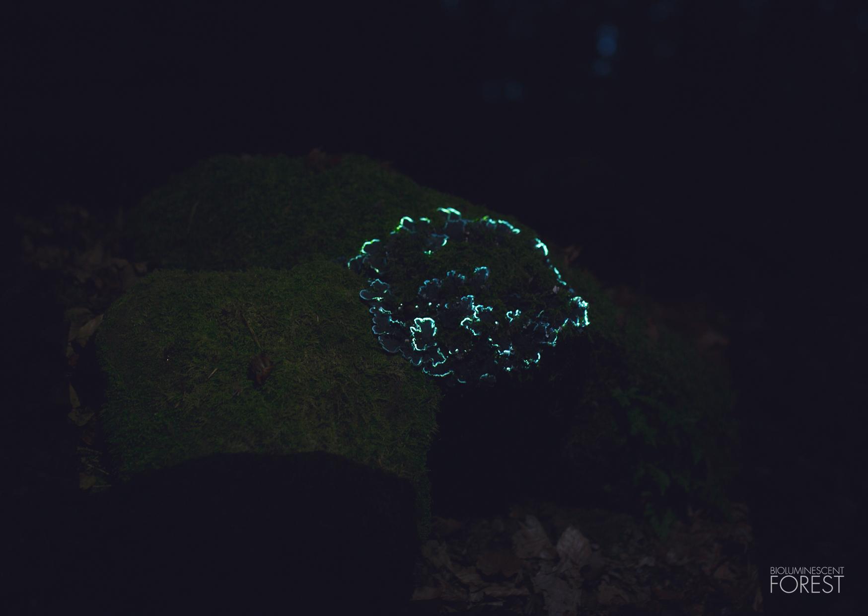 Bioluminescent forest – mushroom_round_03