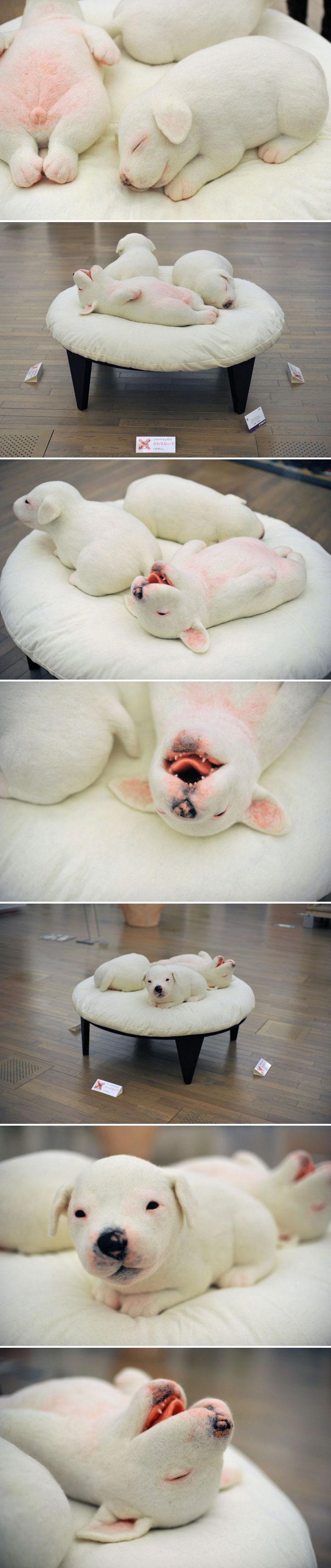 Minami Kawasaki - Home Sweet Home - puppies