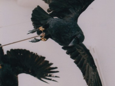 Crow – Christian-Pontus Andersson – sculpture detail