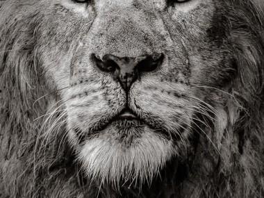 David Lloyd Wildlife Photography – The boss