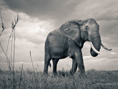 David Lloyd – photography elephant wild life
