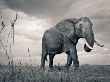 David Lloyd – photography elephant wild life