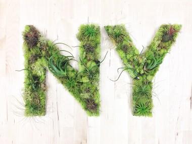 NY Plant Art