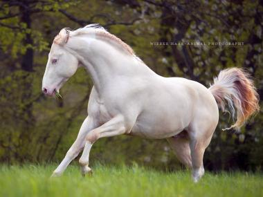 Photographie equine Wiebke Haas