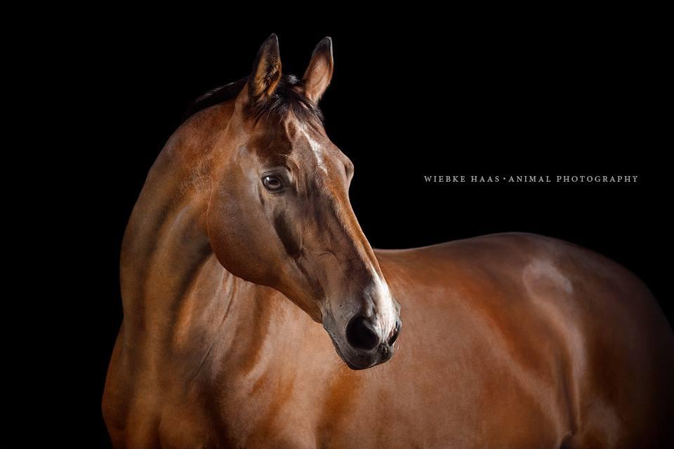 Magnifique photographie equine Wiebke Haas