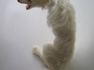 Christy Langer – Sculpture Milker – mohair, silicone, resin, fibre glass, oil paint 28 x 30 x 18cm, 2011
