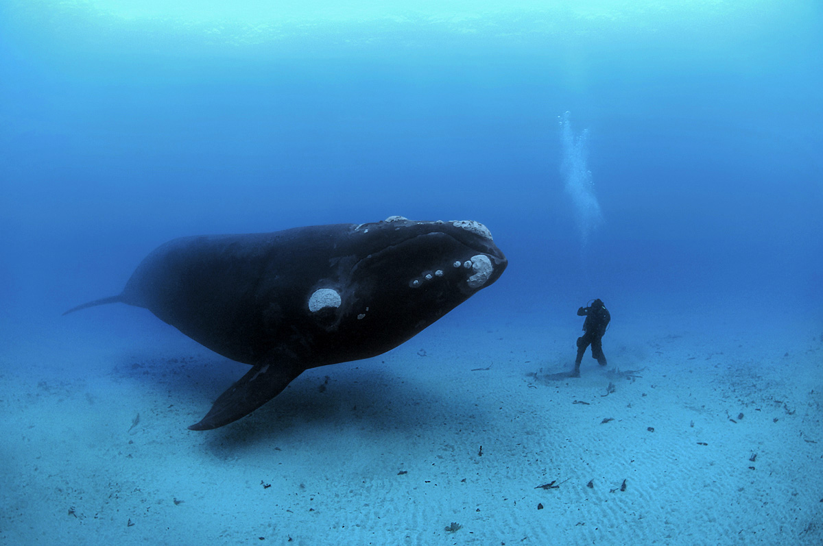 Brian Skerry - photographe sous-marin