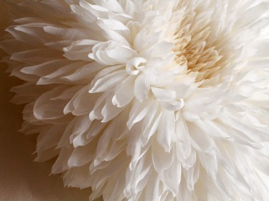 Tiffanie Turner – Paper flower art