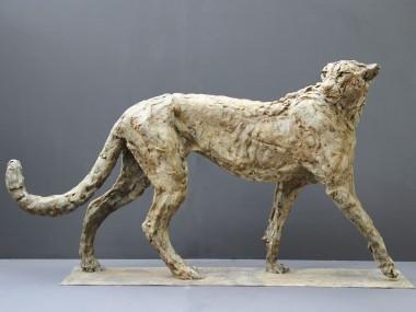 Patrick Villas – Sculptures – Cheetah mâle – Bronze – 66 x 128 x 28 cm