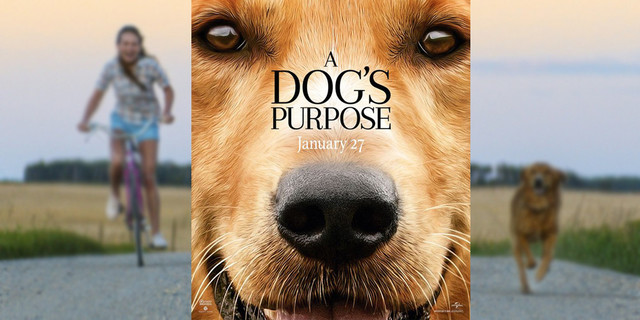 boycott a dog's purpose