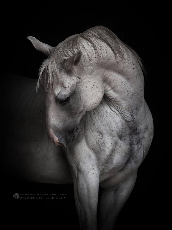 Katarzyna Okrzesik-Mikołajek – Beautiful Horses photography