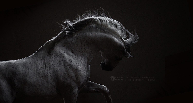 Katarzyna Okrzesik-Mikołajek – Horses photography (Canada)