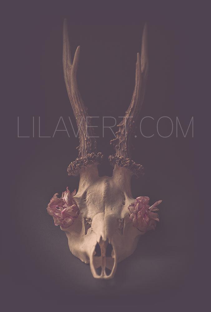 Deer skull – print photo