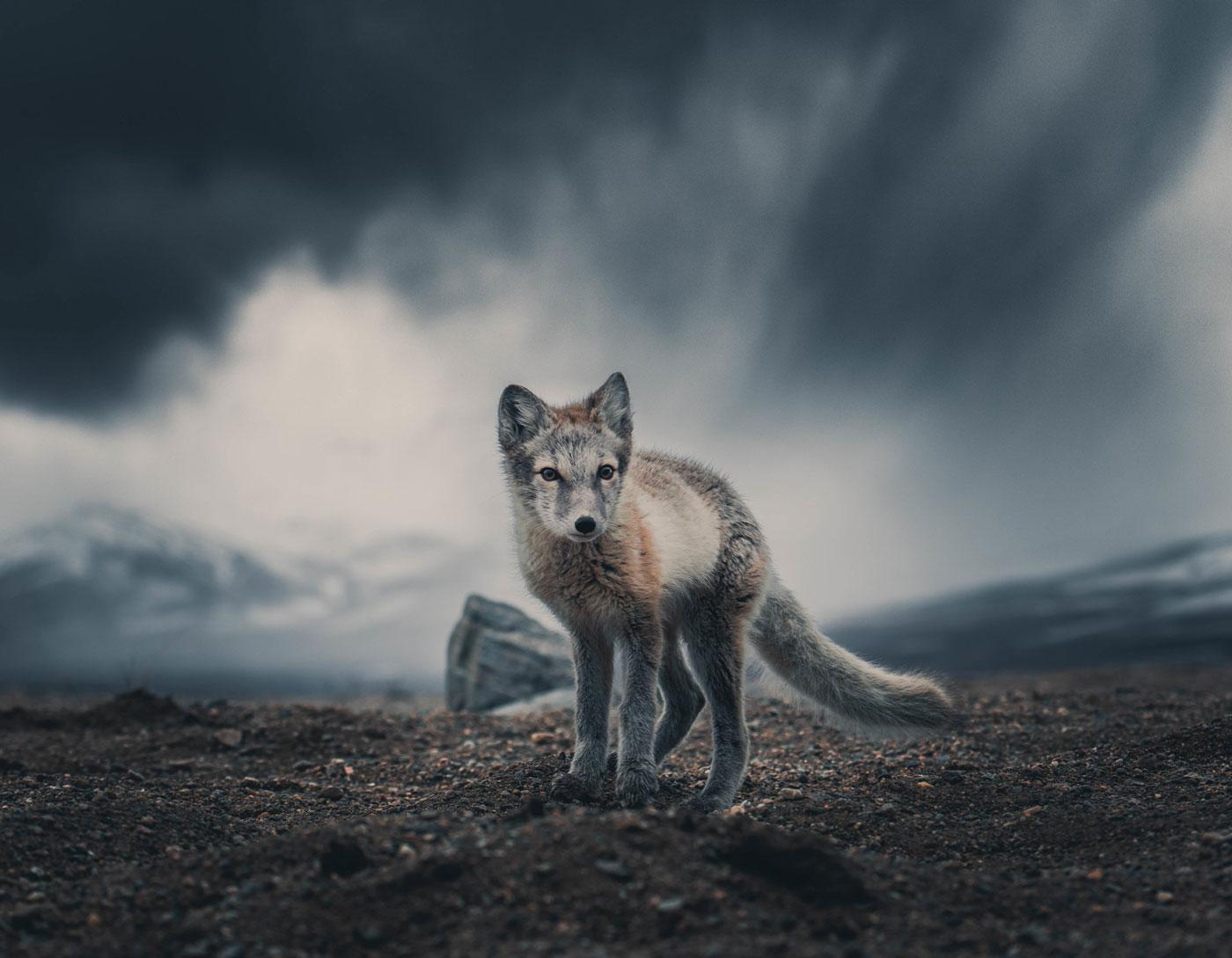 Photography wildlife ©Konsta Punkka