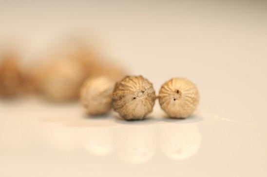 Coriander seed macro
