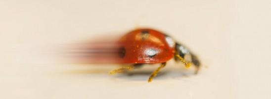 00_FB-ladybug-920x339