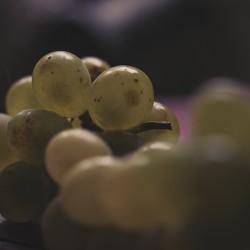 raisins-vintage_1603-web