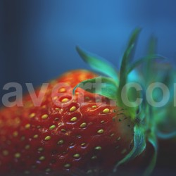 Strawberry - fraise macro