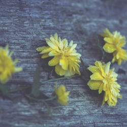 flower-vintage-800x500